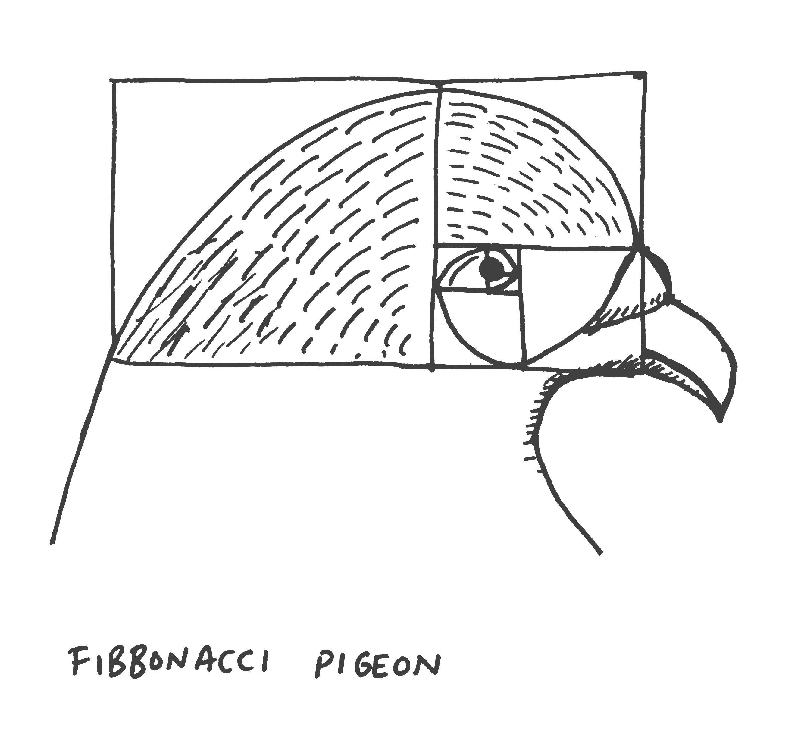 Fibbonacci pigeon