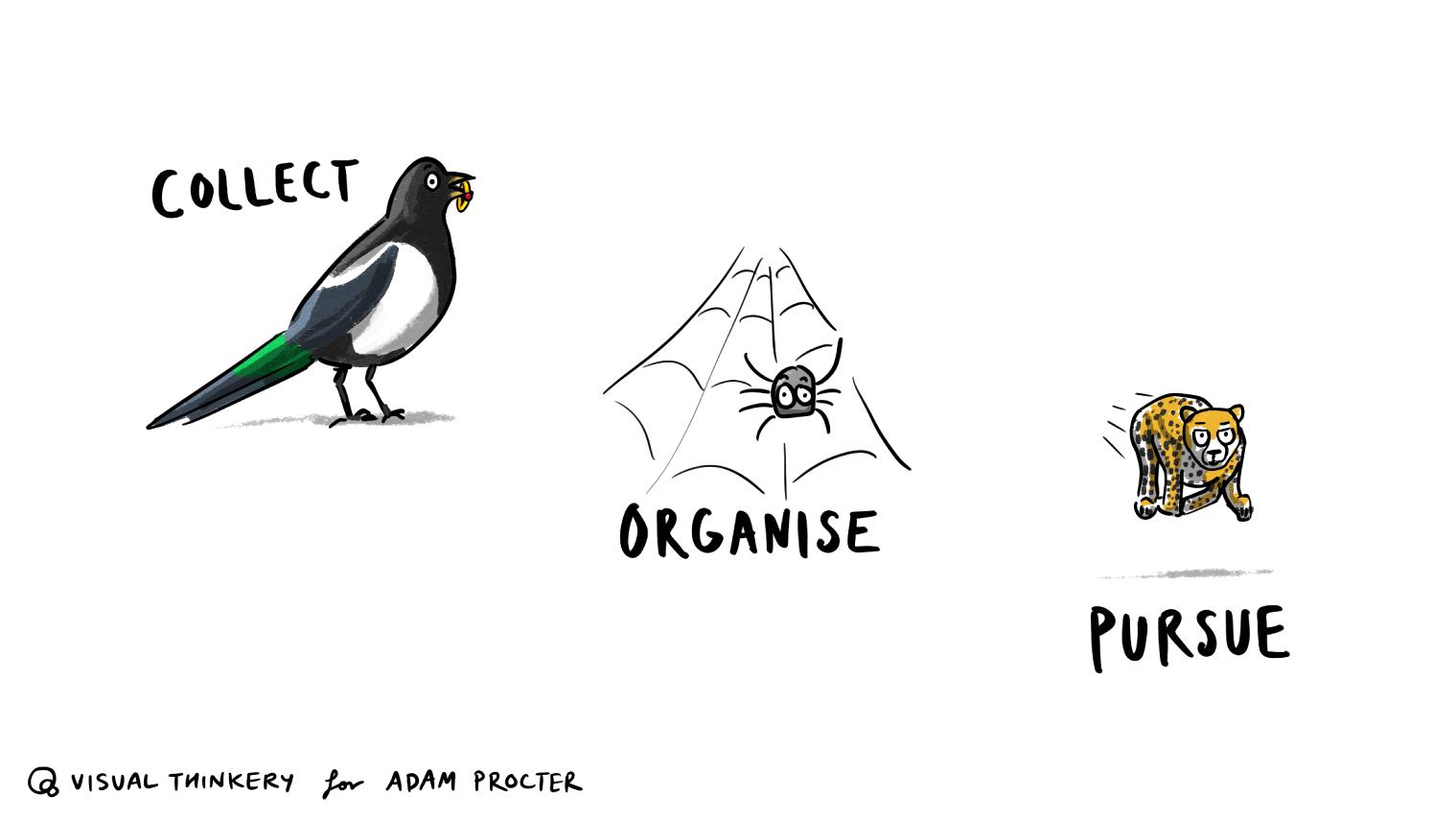 Adam Proctor - Collect, Organise, Persue